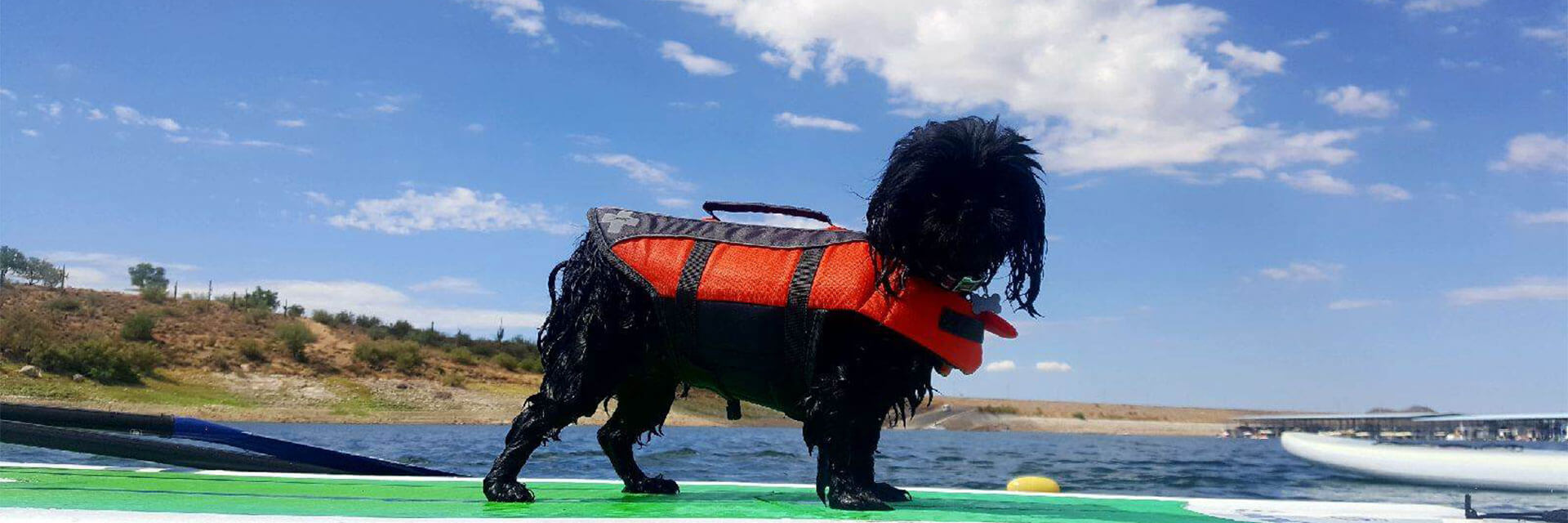 A yappy little dog with a life jacket on standing on a stand up paddleboard